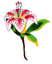 easter lily tattoo design